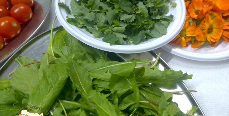 herbs casola valsenio emilia romagna