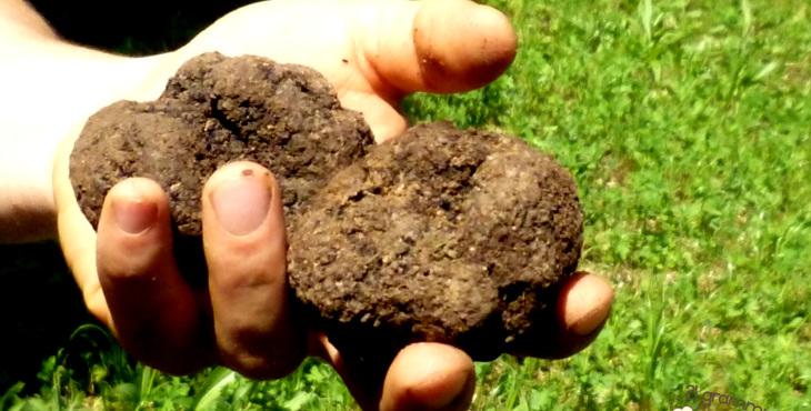 truffles in romagna italy