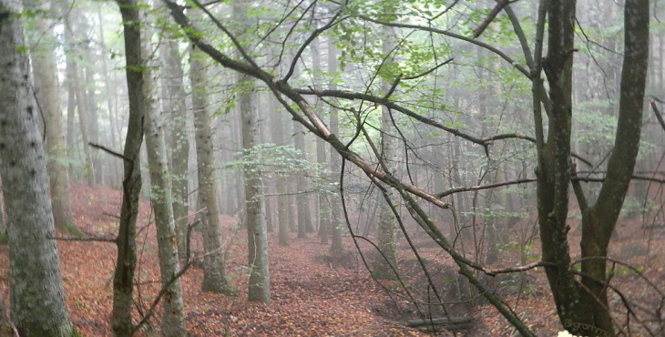 forest emilia romagna