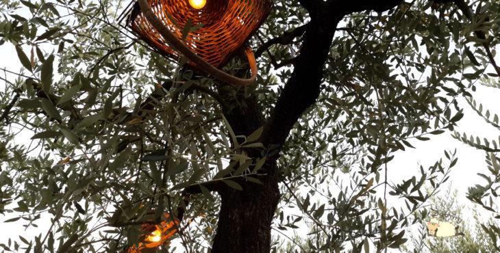 scamporella cesena emilia romagna