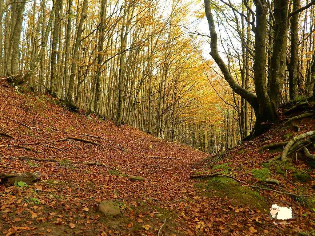 fall foliage campigna emilia romagna
