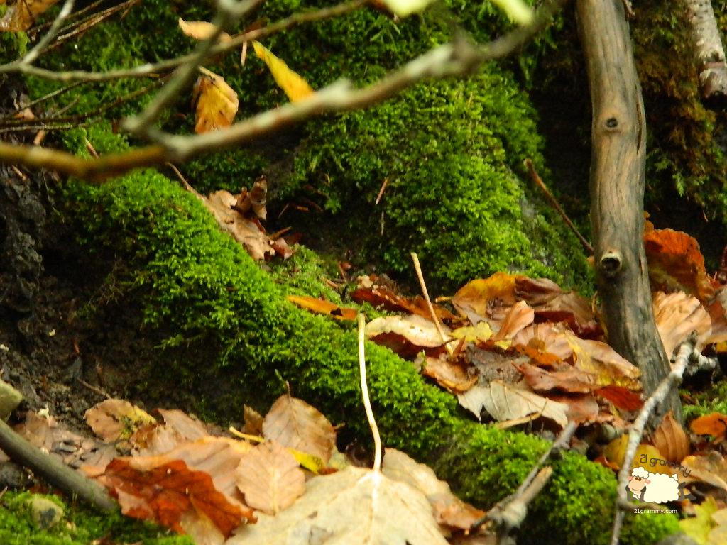fall foliage emilia romagna