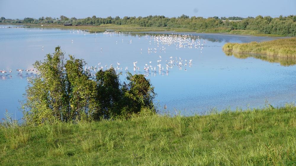 flamingoes-emilia-romagna-b