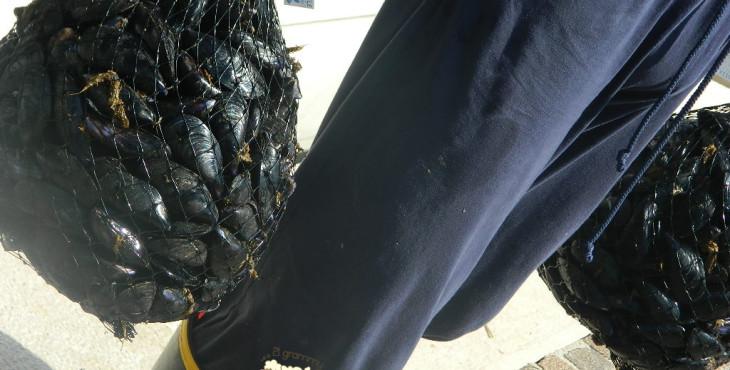 mussels-in-bellaria-emilia-romagna