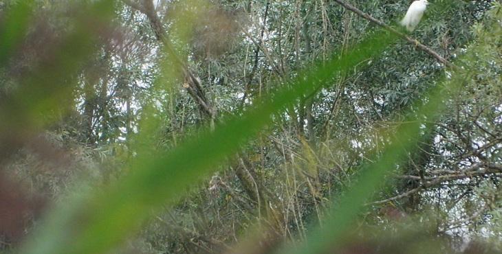 birdwatching in emilia romagna