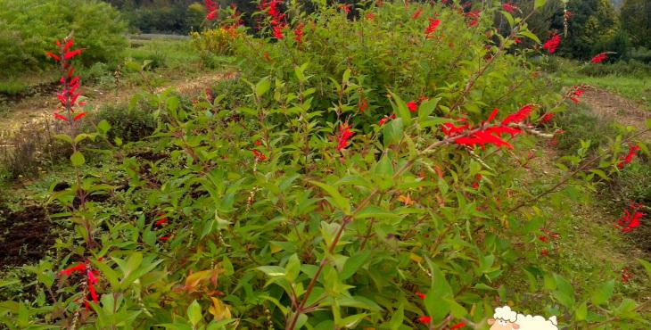 garden in casola valsenio emilia romagna