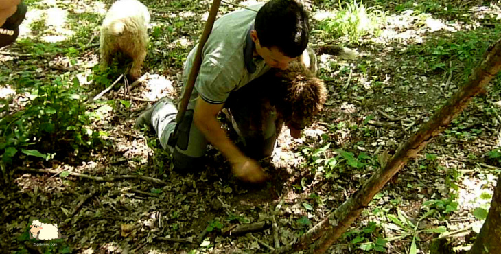 truffle hunting romagna
