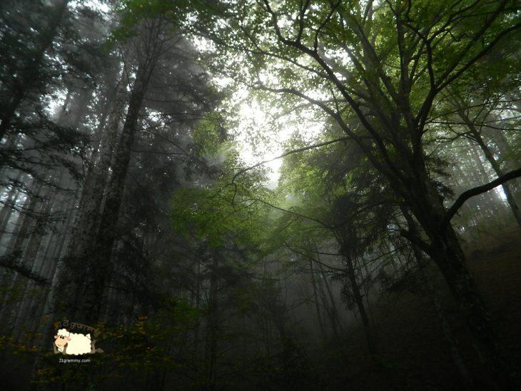 lama ancient forest emilia romagna