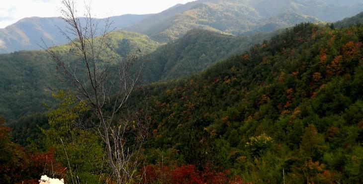 foreste della romagna