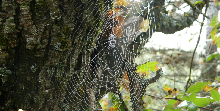 spider in the lama forest
