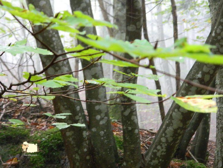 forest in emilia romagna