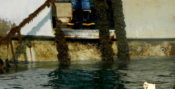 fisherman in emilia romagna