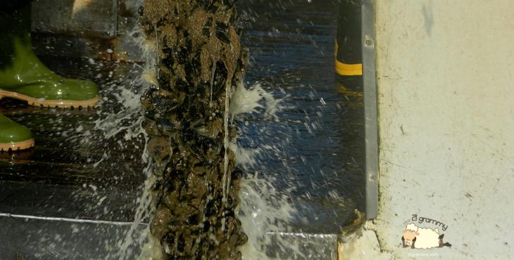 mussels cattolica emilia romagna