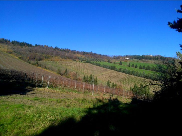 noelia-ricci-emilia-romagna-wine-sangiovese