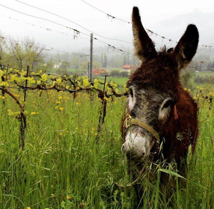 rimini i muretti wine