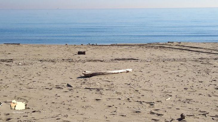beach bevano romagna emilia romagna regional park delta po river