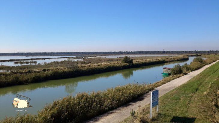 birdwatching romagna bevano delta regional park